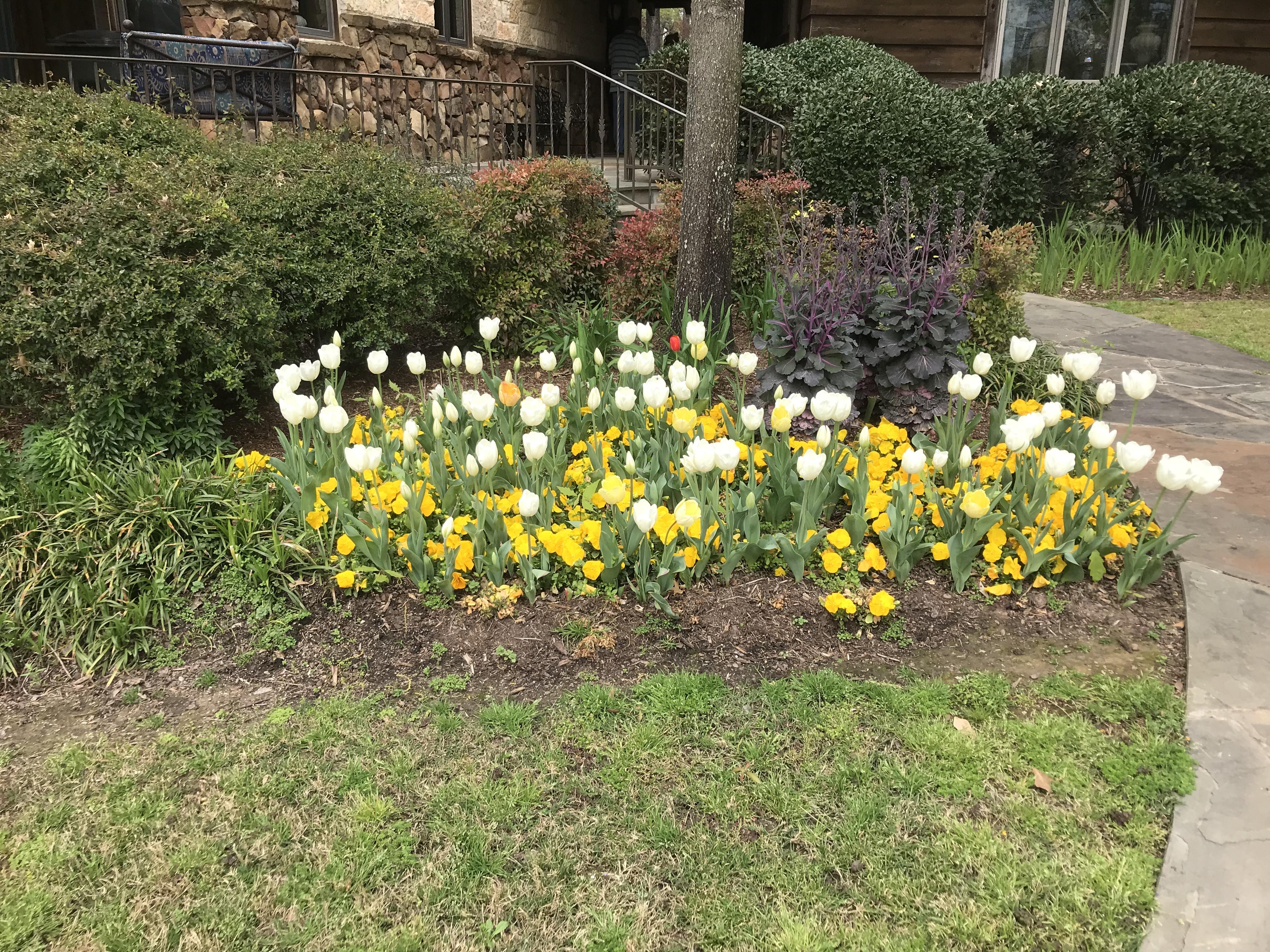2019-Tiptoe-Thru-the-Tulips-40